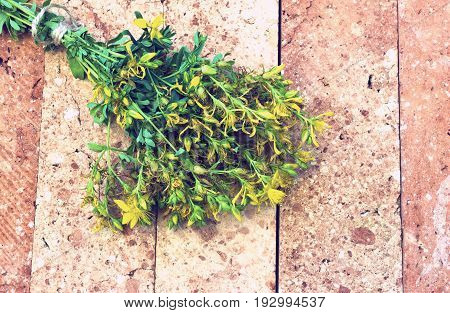 St. John's Wort flowering on a brick base - vintage look