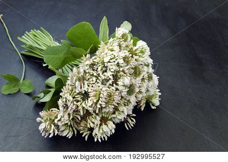 A bouquet of white clover flowers close up