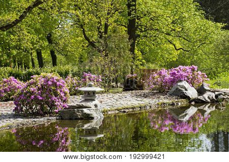 garden in the Japanese style a small pagoda lantern stones stone path shrubs with pink flowers the trees reflected in the water pond in the pond water