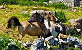 Two ponies in Ireland in a rural setting poster