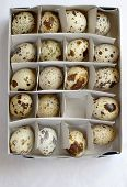 some eggs of quail in a paper box poster