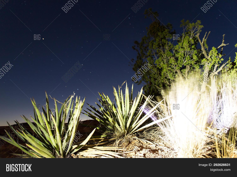 Desert Plants Night Image Photo Free Trial Bigstock