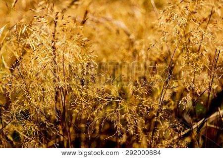 Abstract Blurry Dry Summer Field Grass On A Hot Sunny Day