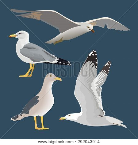 Set Of 4 Sea Gulls. Hovering, Soaring, Standing, With Folded Wings, Resting, Curious. Flying Mew. Lo