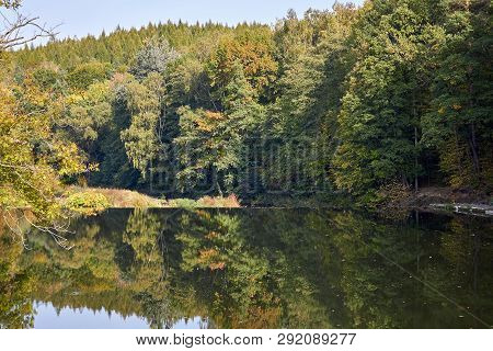 Green Forest And River. Forest Lake. The River Flows Among Trees. Beautiful View Of Nature. Landscap