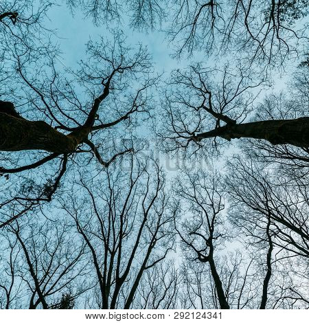 Trees Photographed From Below, Horror, Mysterious, Thriller,  12 December 2018 Epe Veluwe The Nether