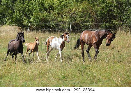 Amazing Batch Of Horses On Pasturage