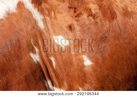 An image of a brown cowhide background texture