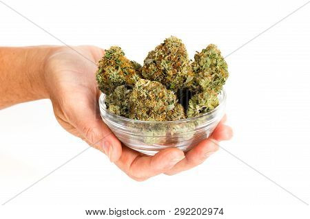 Holding  Clipped Buds