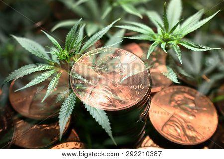 Cannabis Penny Stocks High Quality Stock Photo