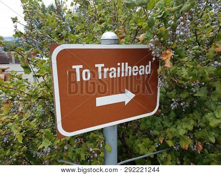 Brown To Trailhead Sign With White Arrow And Berries
