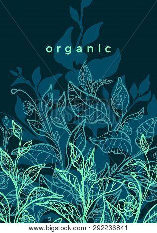 Vector Floral Background. Nature Hand Drawn Illustration, Art Line Botanical Plant. Elegant Graphic
