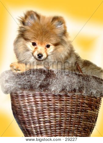 Basket Full Of Fluff