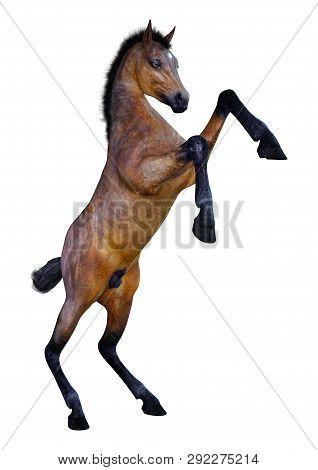 3D Rendering Horse Foal On White