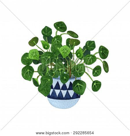 Indoor Plant Watercolor Illustration. Home Plants, Chinese Money Plants Or  Missionary Plants In A C