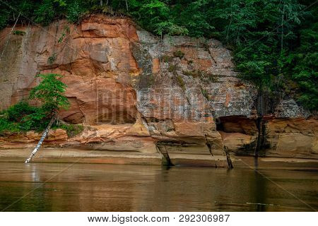 Closeup Of Sandstone Cliff Formation With Cave On Bank Of River Gauja In Latvia. Birch In The River