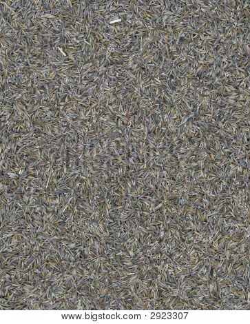 Close Up Of Native Grass Seeds