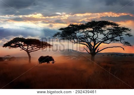 Wild African Elephant In The Savannah. Serengeti National Park. Wildlife Of Tanzania. African Landsc