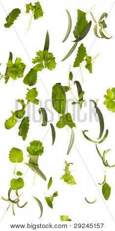 Herbs falling down, isolated on white background