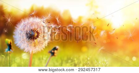 Dandelion In Field At Sunset - Freedom To Wish