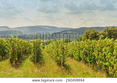 Grape Plants Rows Of Vineyard With Cloudy Sky, Landscape In Bourgogne, France