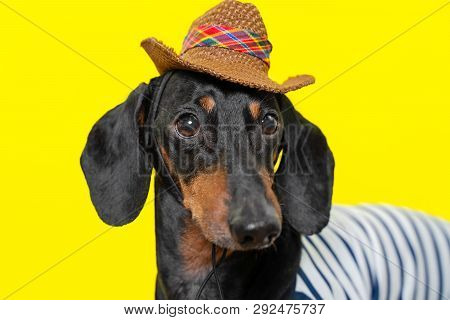 Summer Portrait Of A Adorable Breed Dog, Black And Tan, Wearing A T-shirt And A Cowboy Hat, On A Col