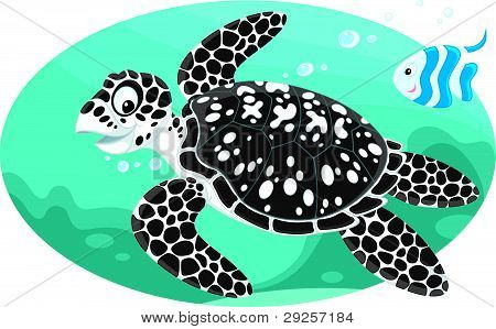 Marine turtle and coral fish