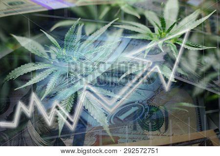 Green Rush Marijuana Profits High Quality Stock Photo