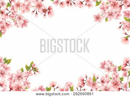 Cherry Blossom Isolated On A White Background