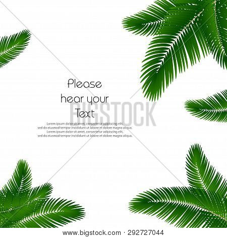 Palm Leaf Background. Palms Leaves For Print. Template Palm Leaves For Cover Book. Realistic Palms L