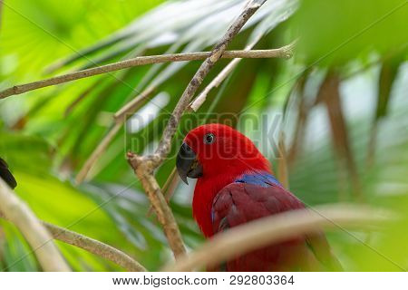 Red Parrot Sitting In A Tree, Side Picture