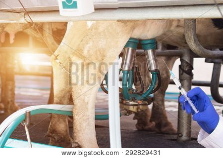 Biologist Holds A Syringe Against The Background Of Milking Cows Milk, The Concept Of Nitrates And A