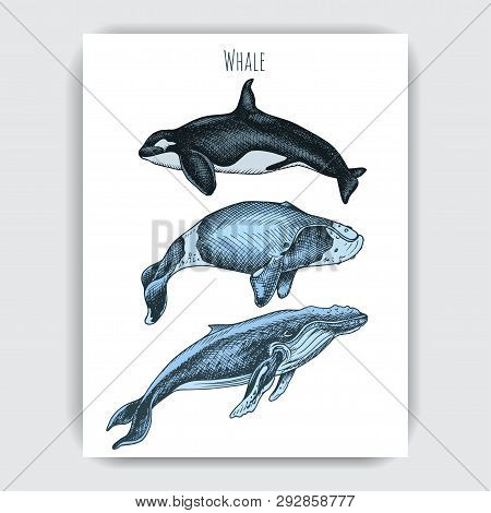 Card With Whale. Vector Hand Drawn Illustration Wildlife Animals.