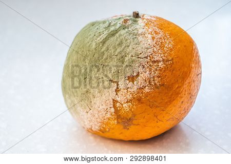 A Set Of Rotten Moldy Oranges, Tangerines Isolated On White Background. A Photo Of The Growing Mold.