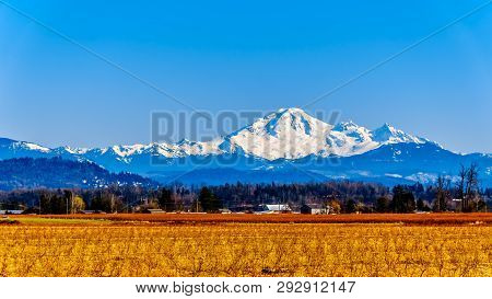 Mount Baker, A Dormant Volcano In Washington State Viewed From The Blueberry Fields Of Glen Valley N