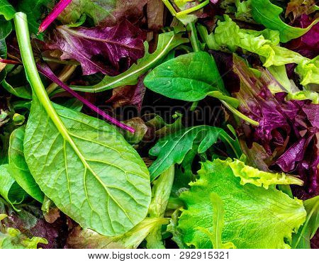 Salad Mix Leaves Background. Fresh Salad Pattern With Rucola, Purple  Lettuce, Spinach, Frisee And