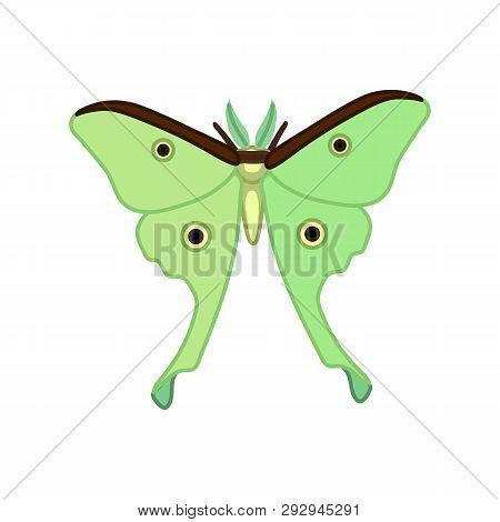 Vector Cute Cartoon Insect Clip Art Butterfly Luna Moth