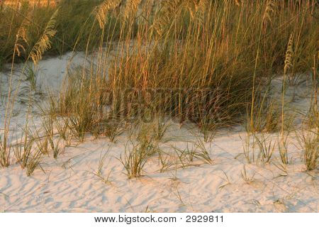 Dunes In Late Day Sunlight