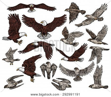 Predatory Birds Of Prey Vector Sketch Icons. Isolated Wild Predators Birds Bald Eagle Flying With Sp