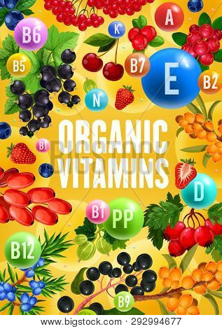 Berries With Natural Organic Vitamins And Minerals Complex. Vector Healthy Superfood Berry Fruits Cr