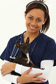 Beautiful Young Adult Veterinarian with Chihuahua over white Background. poster