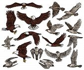 Predatory birds of prey vector sketch icons. Isolated wild predators birds bald eagle flying with spread wings, or falcon and hawk, ornithology or falconry raptor vultures, heraldic symbols poster