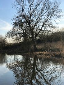 Tall, Bare Trees Reflected In Water Against A Blue Sky On The Shropshire Union Canal Towpath, Upton-