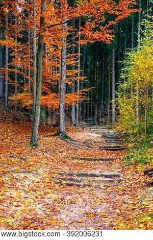 Sandstone Staircase In Autumnal Forest. Bohemian Paradise, Czech Republic