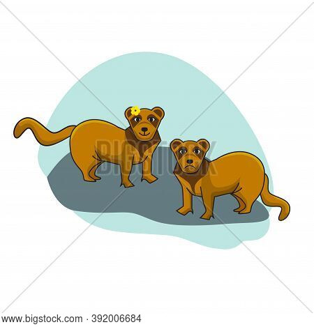 Two Ferrets - Male And Female. Animals Illustration In Flat Style