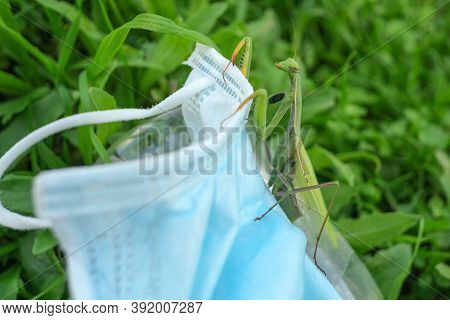 Praying Mantis Living On Discarded Medical Face Mask Waste Pollution.contaminated Habitat, Covid19 T