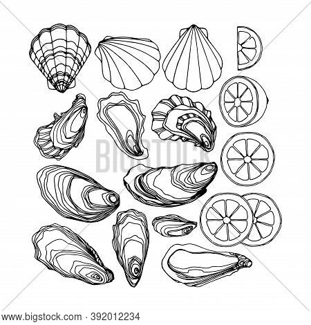Set Of Oysters In The Shell, Scallops, Lemon, Delicious Seafood, Menu Decoration, Vector Illustratio