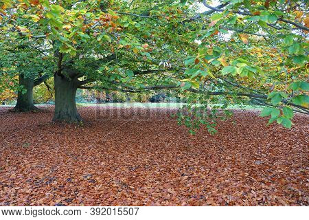 Fallen Maple Leaves On The Ground During Autumn