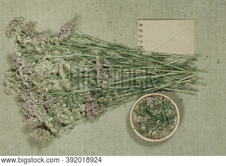 Yarrow. Dry Herbs For Use In Alternative Medicine, Phytotherapy, Spa Or Herbal Cosmetics. Preparing