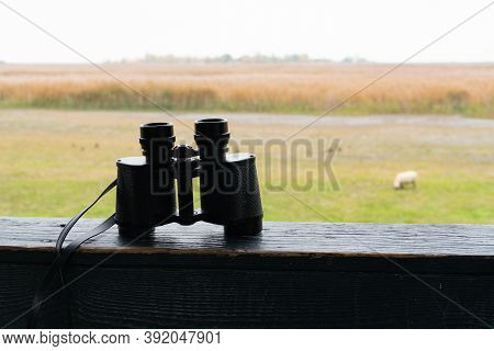 Binoculars Of A Hunter On A Shooting Range. Silent Free Nature And Animal In The Wildnerness.